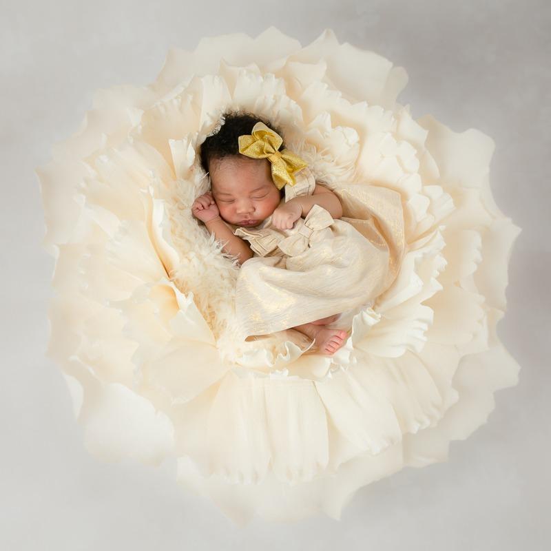 newborn baby girl in cream flower, Charlotte, NC, Clover SC