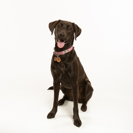 Fort Mill, SC, Tega Cay, SC, Charlotte, NC dog in studio portrait